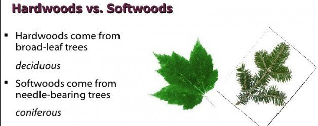 Hardwood And Softwood Trees ~ Hardwoods and softwoods gallery